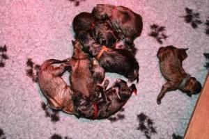 geboorte pupsels 003